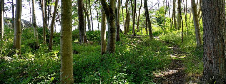 Bilde av grønn skog